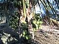 Fazenda Santa Rita - Várzea Redonda PE - panoramio.jpg