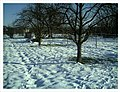February Minus 10 Grad Celsius Apple Trees Germany - Master Magic Rhine Valley Photography 2013 - panoramio.jpg