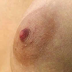 Female Areola.jpg