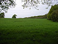 Field below Halebourne Copse - geograph.org.uk - 166159.jpg