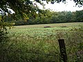 Field next to Bridleway leading to Rowbarns Manor - geograph.org.uk - 69094.jpg