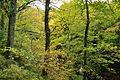 Fingle Woods (6244).jpg