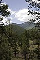 Flagstaff Scenery near FR 522 - panoramio (3).jpg