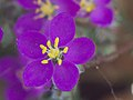 FlorecillaRosaEnAlgete.jpg
