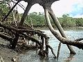 Florestade Raízes (Guaxindiba) - panoramio.jpg