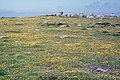 Flower-rich grassland, Wingletang Down, St Agnes, Scilly - geograph.org.uk - 1540871.jpg