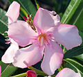 Flower 3 (3237471642).jpg
