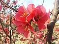 Flowers57.jpg