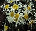 Flowers - Uncategorised Garden plants 207.JPG