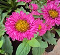Flowers - Uncategorised Garden plants 72.JPG