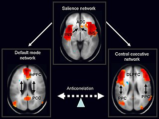 Salience network large scale brain network of the human brain, composed of the anterior insula and dorsal anterior cingulate cortex, which is involved in detecting and filtering salient stimuli, as well as in recruiting relevant functional networks
