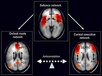 Salience network - The salience network is theorized to mediate switching between the default mode network and central executive network.