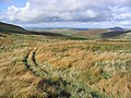 Following a grass track in the Cheviot Hills - geograph.org.uk - 265138.jpg