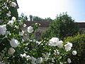 Fontenay garden.jpg