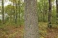Forêt Départementale de Méridon à Chevreuse le 29 septembre 2017 - 31.jpg