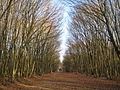 Forêt de Rennes.JPG