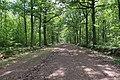 Forêt domaniale de Bois-d'Arcy 22.jpg