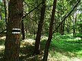 Forest (Kukulka).jpg