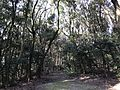Forest in Chiriku Hachiman Shrine 3.jpg