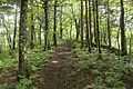 Forest in Doshi 12.jpg