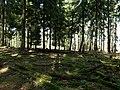 Forest in the Heidetränk Oppidum.jpg