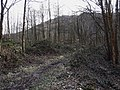 Forest walk - geograph.org.uk - 1706580.jpg