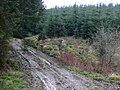 Forestry Road near Llyn Brianne, Powys - geograph.org.uk - 1039385.jpg