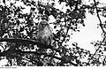 Fotothek df rp-c 0190010 Triebischtal-Garsebach. Schleif- oder Mittelmühle, Käuzchen auf einem Apfelbaum.jpg