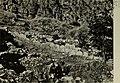 Fouilles de Delphes (1902) (14792888433).jpg