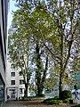 Frankfurt-Bockenheim Gräfstraße 13.jpg
