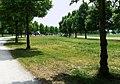 Frankfurt am Main, Niddapark, Lindenallee.jpg