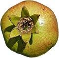 Fruit in Sion.jpg