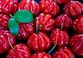 Fruits of Eugenia uniflora.jpg