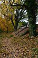 Fulles i arbres a la tardor, riu Palància per Sogorb.JPG