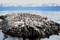 Fur Seals, Beagle Channel - Flickr - gailhampshire.jpg