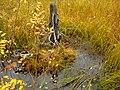 G. Apatity, Murmanskaya oblast', Russia - panoramio (9).jpg