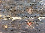 Gamle pinde fra tidligere udskiftninger af kobberforhudningen sammen med nye pinde (8447571668).jpg