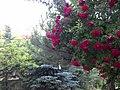 Garden - panoramio - collage bird's eye v….jpg