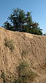 Garden Way - Wall - trees - streamlet - 17 Shahrivar st - Nishapur 20.JPG