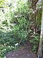 Gardenology.org-IMG 0669 rbgs10dec.jpg