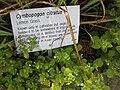 Gardenology.org-IMG 2877 rbgs11jan.jpg