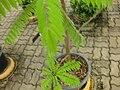 Gardenology.org-IMG 7966 qsbg11mar.jpg