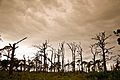 Gaspirilla National Park-4840.jpg