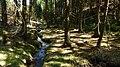 Gelobtbachtal, údolí Klopotského potoka - panoramio (32).jpg