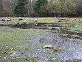 Geological reserve P. van de Lijn in Urk, Urkerbos. - panoramio (2).jpg