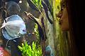 Georgia Aquarium (4662882771).jpg