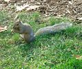 Gfp-squirrel-3.jpg