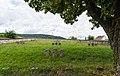 Gleiszellen Gleishorbach Veteranenfriedhof (Denkmalzone) 008 2016 08 04.jpg