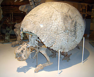 Peter Wilhelm Lund - Glyptodon fossil collected by Lund, Zoological Museum, Copenhagen
