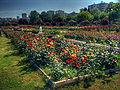 Goztepe Park 06908.jpg